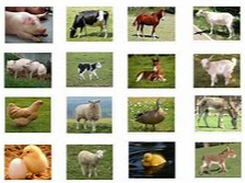 f-farm-animals WEEKLY THEME -Farm - Match The Farm Animals To Their Siblings