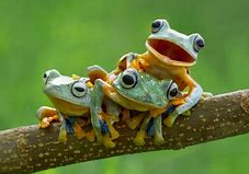 frogs Events